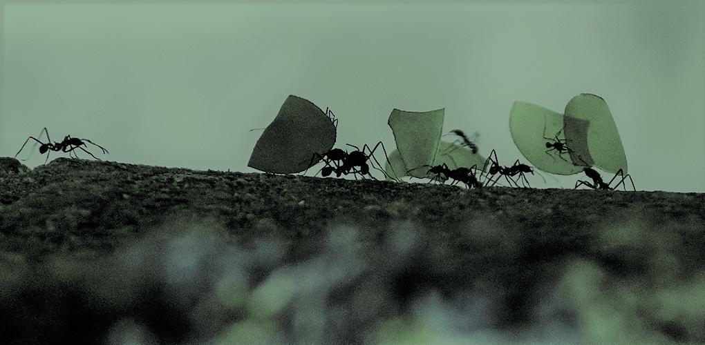 働き蟻の法則