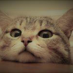 好奇心と猫 ~ 超えちゃいけない境界線