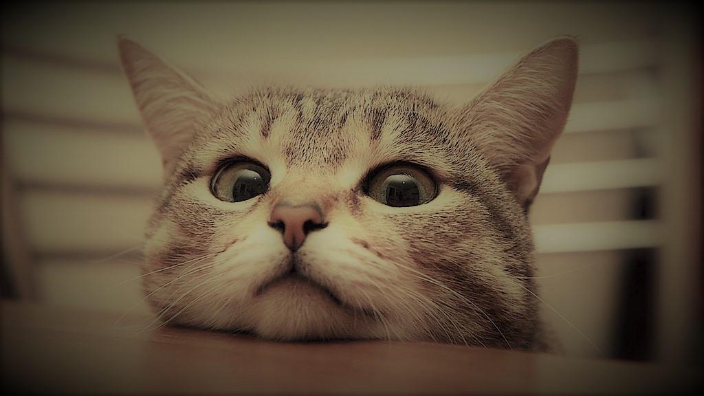 好奇心と猫