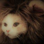 カズウィーンの勇者殿 ~ 鬣(たてがみ)の無い獅子