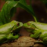 近所に住む2匹のカエル ~ 環境の選択