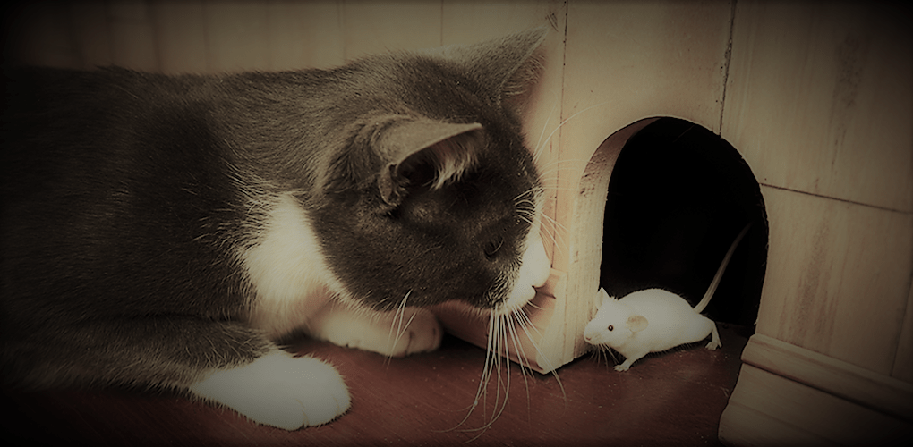 ネズミの相談
